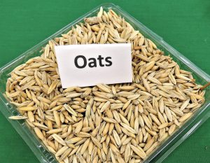 Bowl of oats on a green background