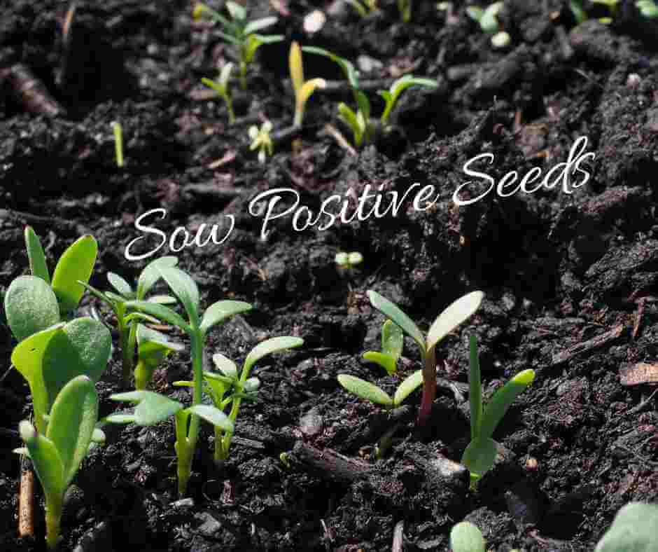 Seedlings growing and the words, Sow Positive Seeds